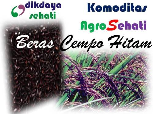 Komoditas Agro Sehati Dikdayasehati Beras Cempo Hitam Kualitas Sehati