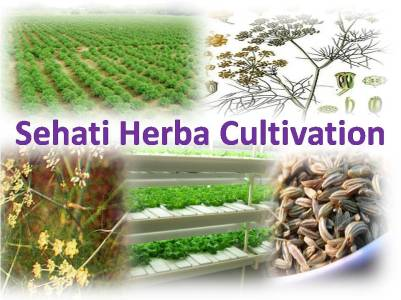 Sehati Herbal Cultivation & Manufacturing (1)