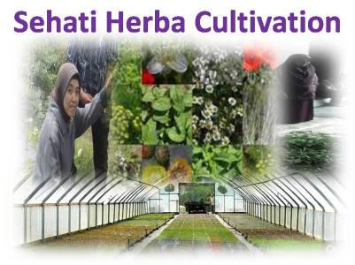 Sehati Herbal Cultivation & Manufacturing (2)